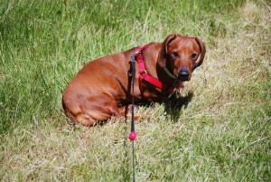 Sweet Reba in the Grass